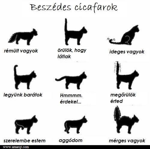cicafarok_jelentese