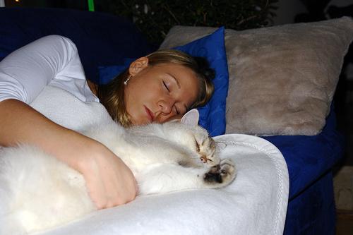 macskaval-alszik