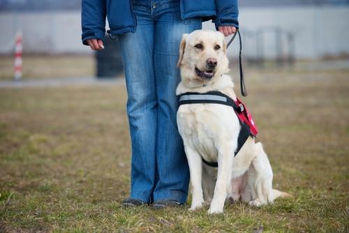 vakvezeto-kutya-labrador