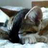 Jógázó cica - videó