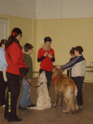 terapias-kutyak