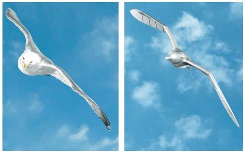robormadar-smartbird