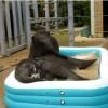 Aquapark bébi elefántoknak - videó