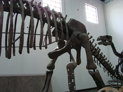 dinoszaurusz-csontvaz