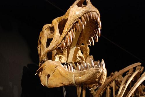 tarbosaurus-bataar