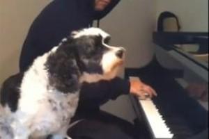 Rocky átéléssel énekel a gazdinak - videó
