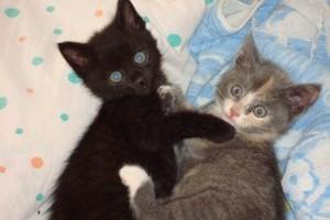 Két pici cica gazdit keres