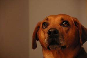 Japánban három hetet várt a kutya a megmentőjére