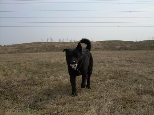 kutya-hozza-a-labdat