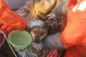 Újra gazdájánál a cunami után kimentett kutya