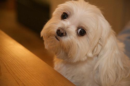 felos-kutya