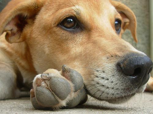 kutya-egyedul