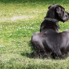 Átlőtték a család kutyáját Nyíregyházán