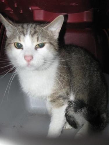 macska-elviheto