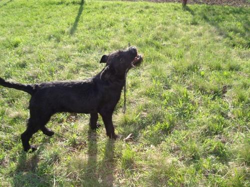 fekete-kutya-ingyen