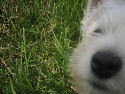 westi-kutyakolyok