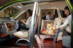 Honda WOW - A kutyaautó