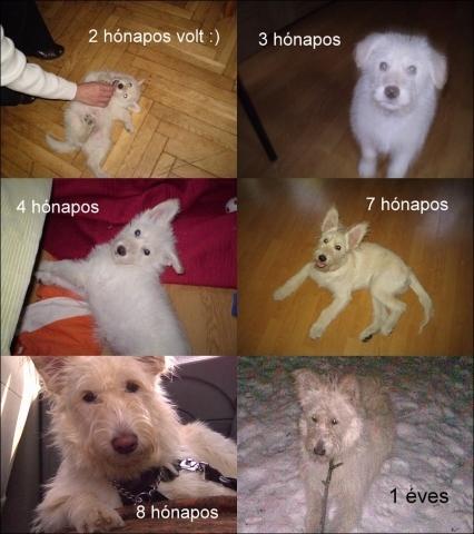 ingyen-kutya