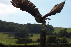 Hazánk szerepe felértékelődött az európai madárvédelemben
