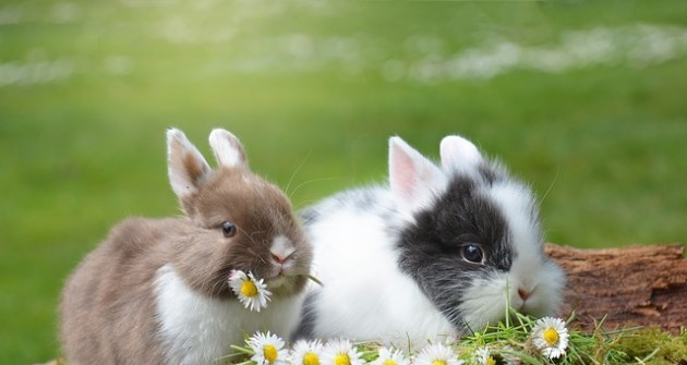 A húsvéti nyuszi története