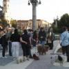 Tiltakoznak a nagyváradi állatbarátok