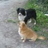Két fiú kutyus szerető gazdit keres
