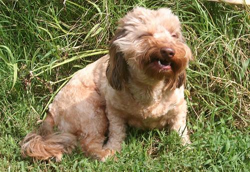 tusszento-kutya