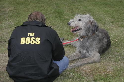 alfa-kutya