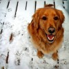 "Kutyaidomítás: A ""kutyasuttogó"" módszer"