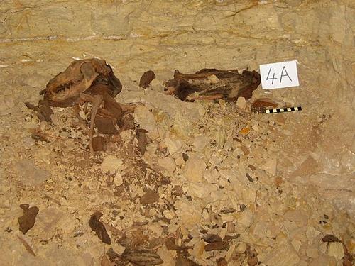 mumifikacio