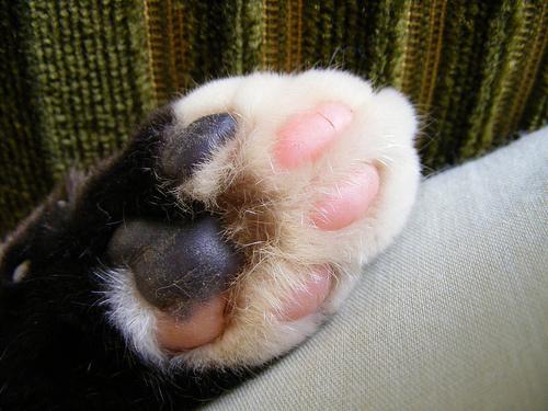macska-tappancs