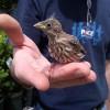 BirdLife International madármegfigyelő verseny