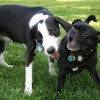DogStop, a legjobb kutyariasztó - ha két kutya összekap