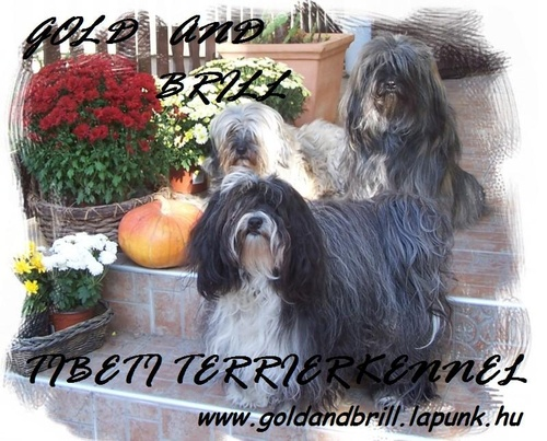 tibeti-terrier-kennel