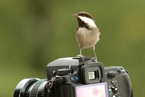 Új webkamerákat szerelt fel az MME