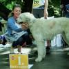 Gazdik és kutyusok együtt versenyeztek