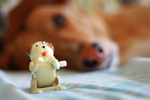 kutyajatek
