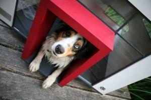 Döbbenet! Igazi házak kutyáknak