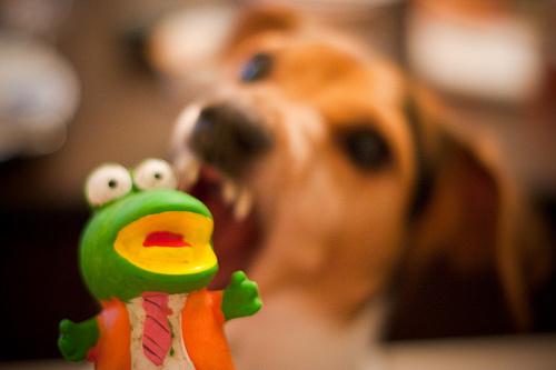 agressziv-kutyus