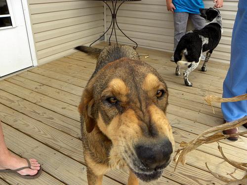 veszelyes-kutya