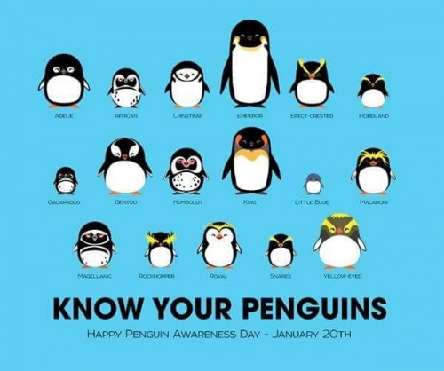 pingvinek1