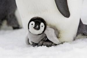 Pingvinfajok, avagy minden pingvin a listánkon van