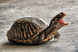 Érdekességek a teknősökről