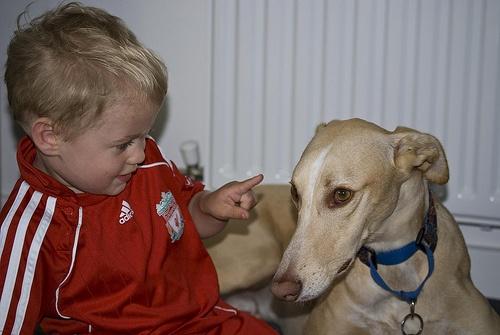 gyerek-felelosseg-kutya