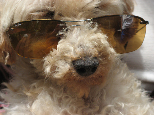 napszemuveges-kutya
