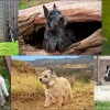 Top 10 Terrier kutyafajták