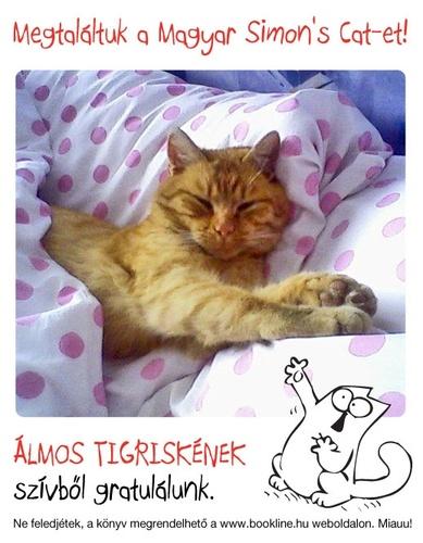magyar-simons-cat-tigris
