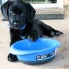A boldogság és az egészség titka: a kutya etetése