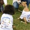 Örökbefogadott vagy fajtatiszta kutyát választunk?