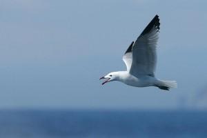 Nőtt a hazánkban megfigyelt madárfajok száma